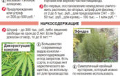 Закакие растения научастке накажут?