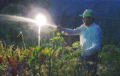 Ночная смена. Работать в саду летом приятнее после захода солнца